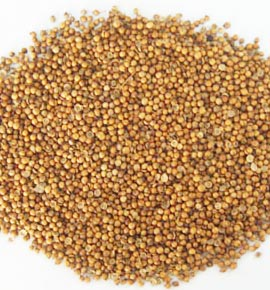 Coriander Seeds - 1 ounce